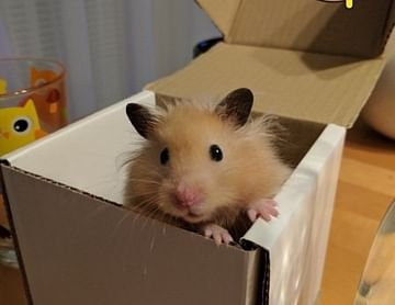Das ist ein Hamster