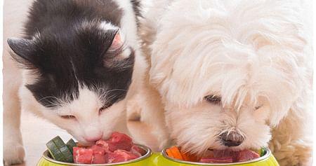 3 Pets Deli Probierpakete
