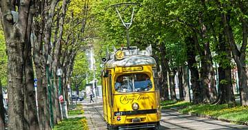 Eine Runde mit der Vienna Ring Tram exklusiv für dich und deine besten 24 Freunde