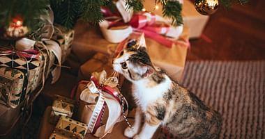 Wer in der Vorweihnachtszeit vielfältige Geschenke ganz entspannt von zuhause aus shoppen möchte, sollte jetzt zuschlagen. Mit unseremGutschein von Universal Versand sicherst du dir einen Nachlass in Höhe von 18€.